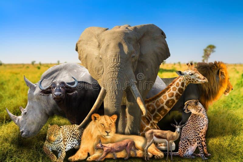 Fundo africano selvagem dos animais fotos de stock royalty free
