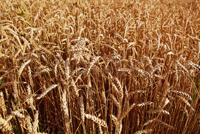 Fundo agricultural fotografia de stock
