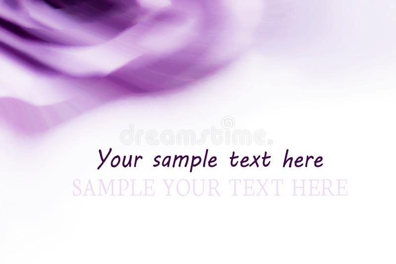 Fundo alfazema-cor-de-rosa violeta bonito, com linhas lisas com espaço branco para o texto A alfazema mudada aumentou para o fun ilustração stock