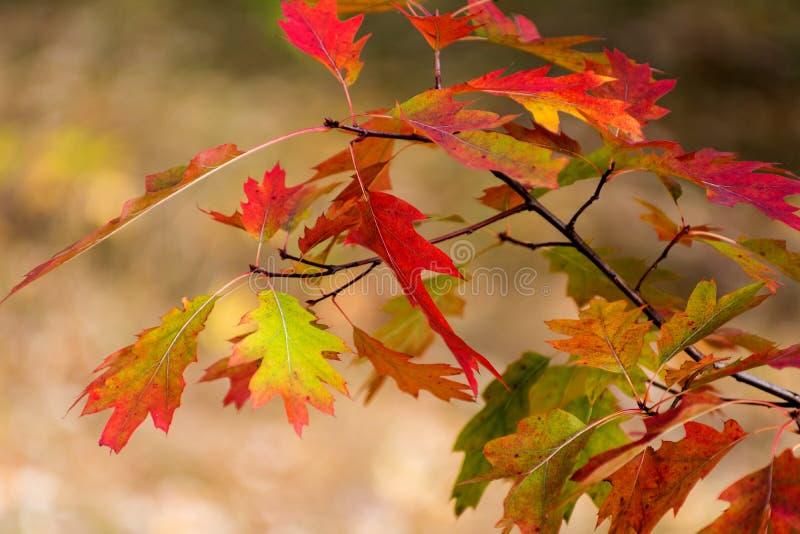 Fundo amarelo bonito das folhas de outono do vermelho alaranjado imagens de stock royalty free