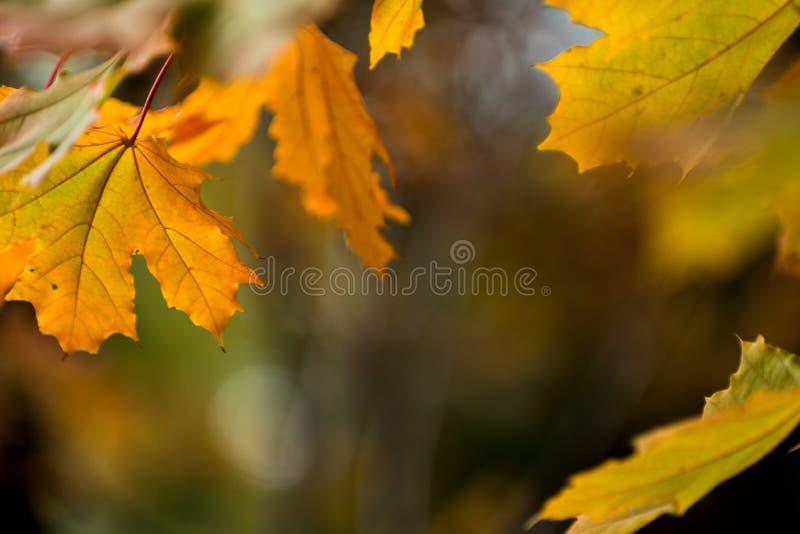 Fundo amarelo bonito das folhas de outono do vermelho alaranjado fotografia de stock royalty free