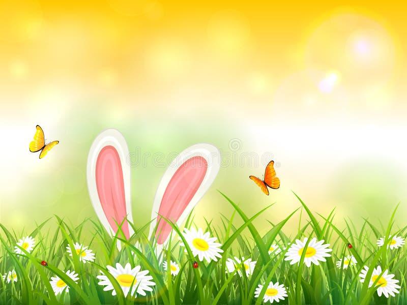 Fundo amarelo da natureza com as orelhas de coelho na grama ilustração do vetor
