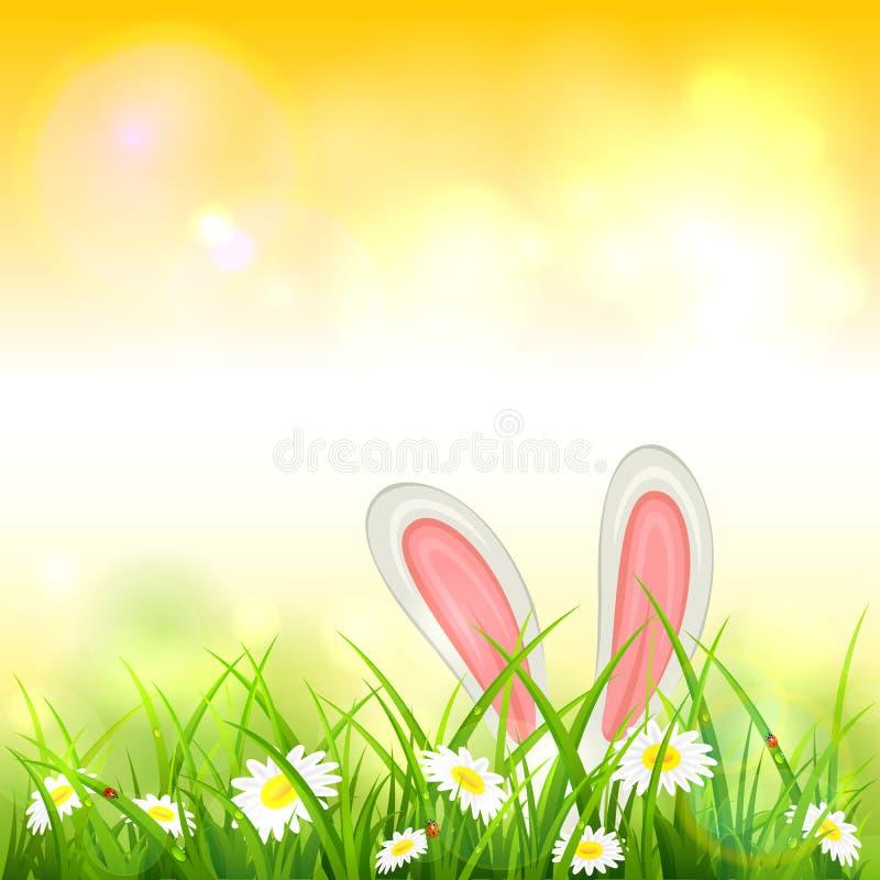 Fundo amarelo da natureza com coelho da Páscoa ilustração royalty free