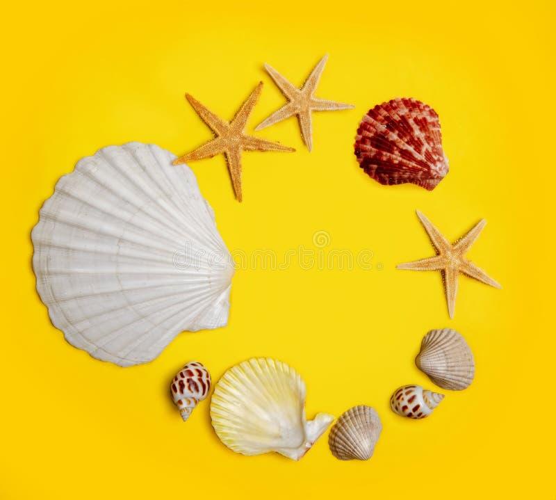Fundo amarelo de Shell foto de stock