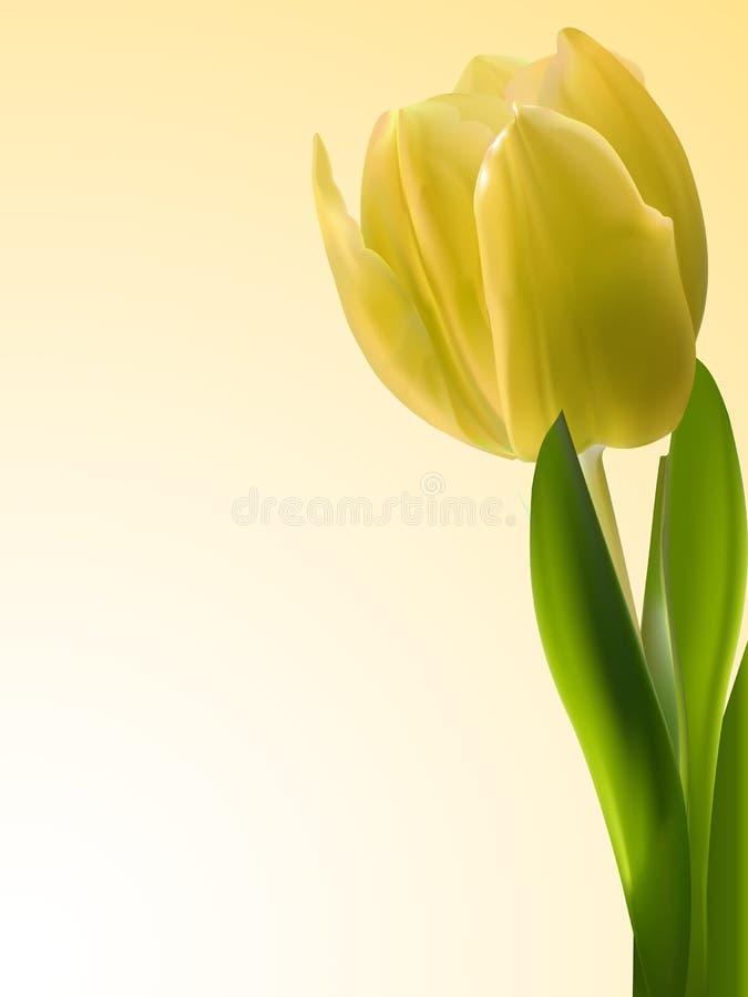Fundo amarelo do tulip ilustração royalty free