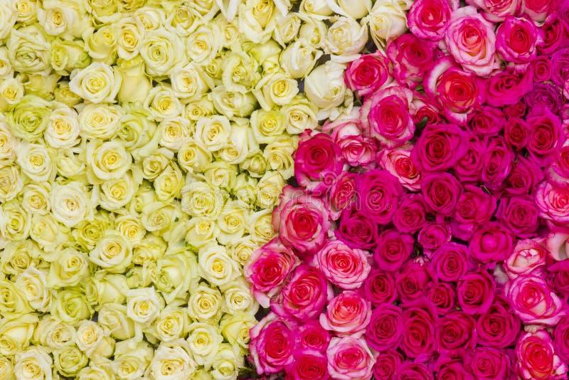 Fundo amarelo e cor-de-rosa das rosas imagens de stock royalty free