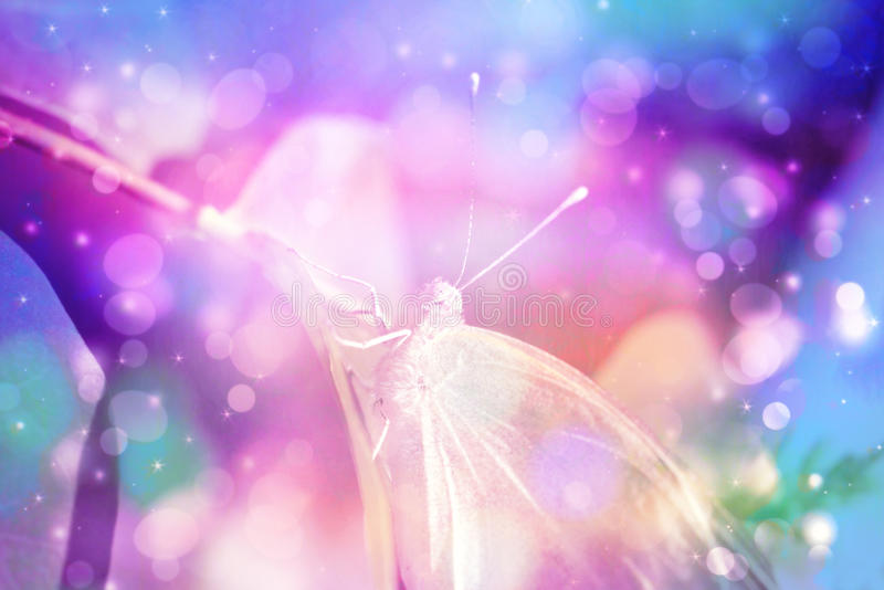 Fundo artístico bonito com borboleta imagens de stock royalty free