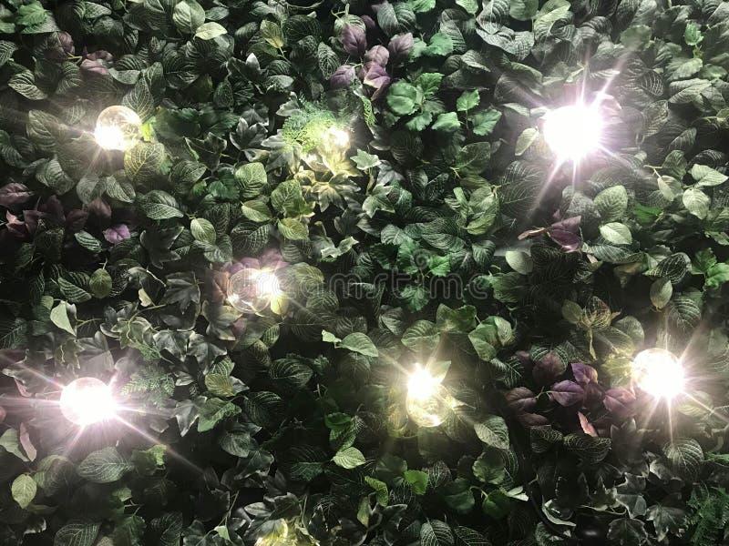 Fundo artificial bonito da parede da planta com ligh iluminado imagens de stock