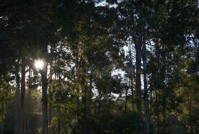 Fundo australiano do bushland fotografia de stock royalty free
