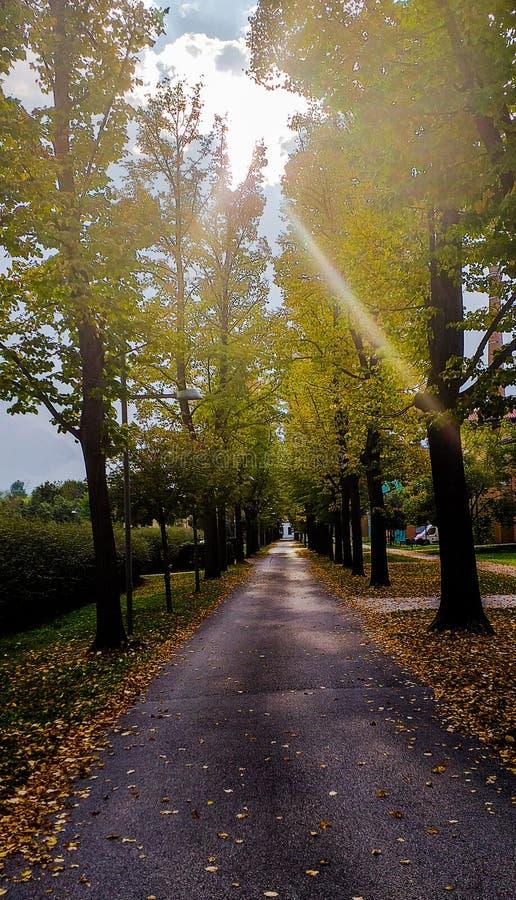 Fundo, avenida arborizada com sol entre as folhas das árvores no início do outono, no chão, o primeiro outono deixa o foto de stock