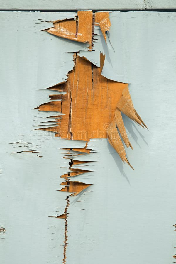 Fundo azul da textura da madeira compensada e da pintura da casca foto de stock