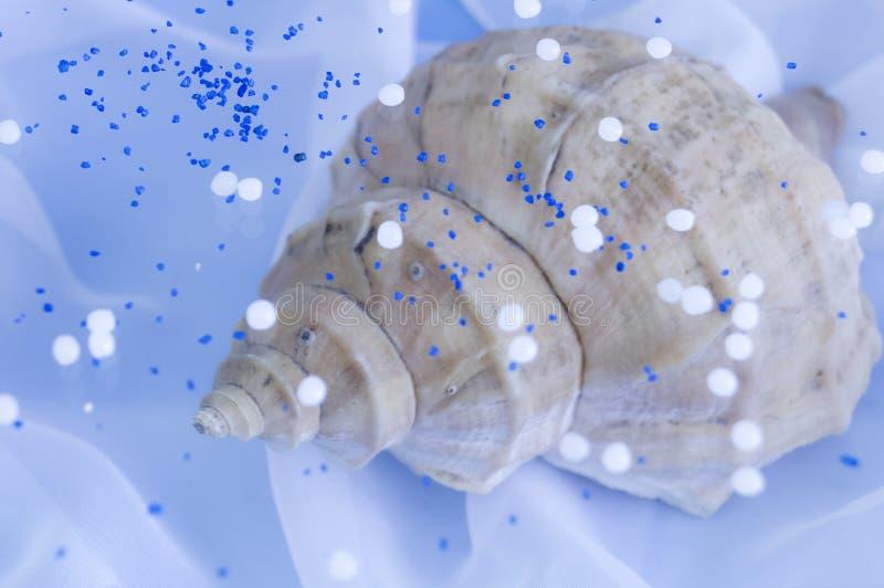 Fundo azul delicado com grande concha do mar fotografia de stock