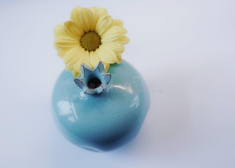 fundo azul do branco do amarelo do crisântemo da cor do vaso cerâmico fotos de stock
