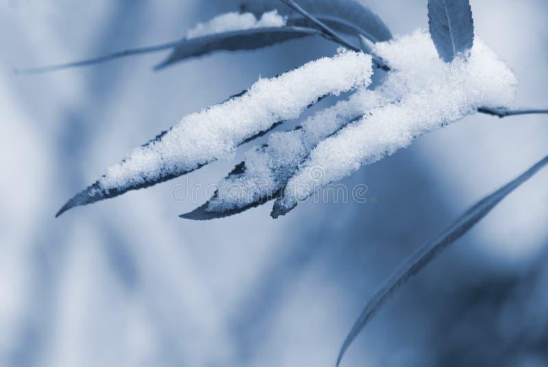 Fundo azul do inverno fotografia de stock