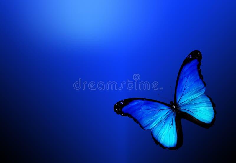 Fundo azul do onblue da borboleta foto de stock