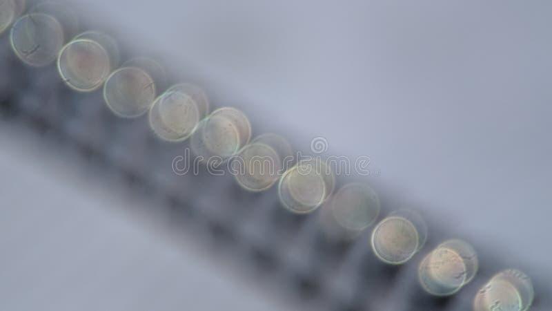 Fundo azul do tom de Bokeh, obscuro e granulado com filtro do vintage foto de stock