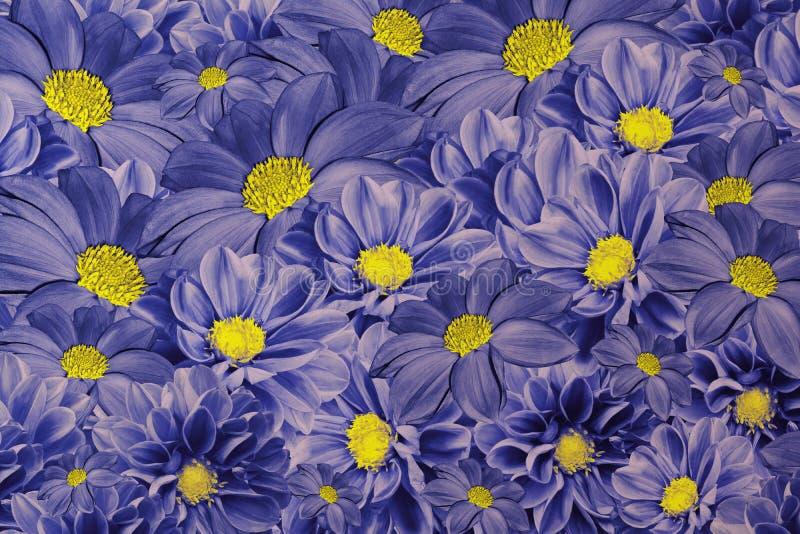 Fundo azul floral das dálias Arranjo de flor brilhante Um ramalhete de dálias azul-amarelas fotografia de stock