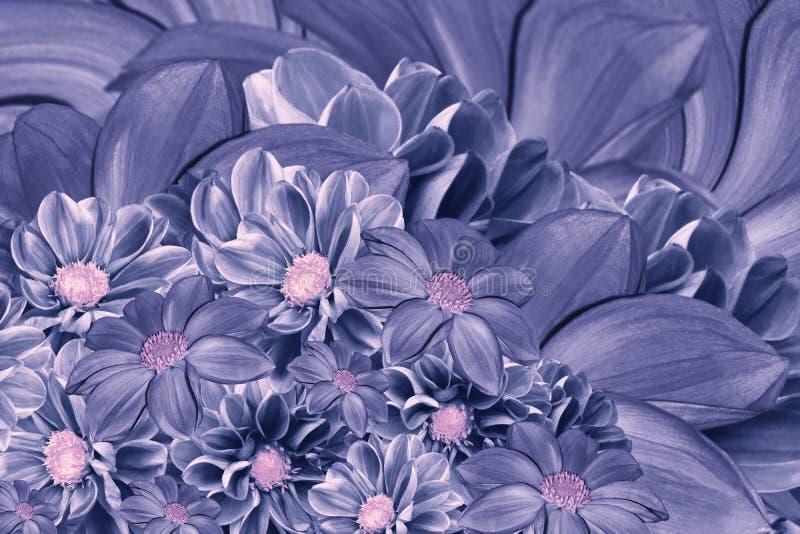 Fundo azul-violeta floral das flores da dália Arranjo de flor brilhante Um ramalhete de dálias azuis imagens de stock