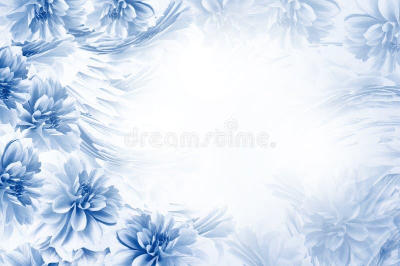 Fundo bonito azul-branco floral Composição das dálias azul-brancas das flores Cartão para o feriado nave fotos de stock royalty free