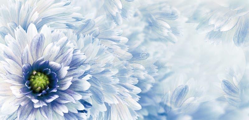 Fundo bonito branco-azul floral Flores e p?talas de uma d?lia branco-vermelha Close-up Composi??o da flor Cart?o FO fotos de stock