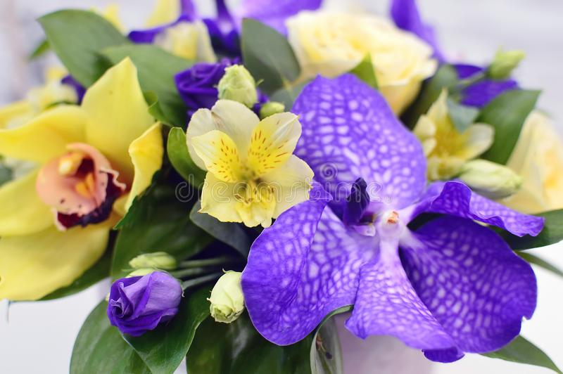 Fundo bonito brilhante da flor foto de stock