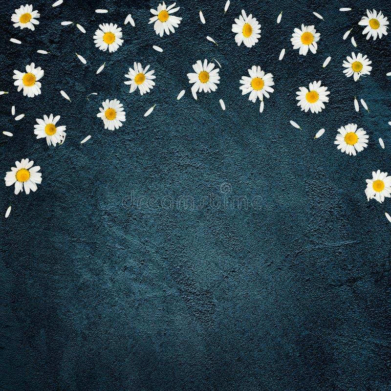 Fundo bonito com margarida da flor fotografia de stock royalty free