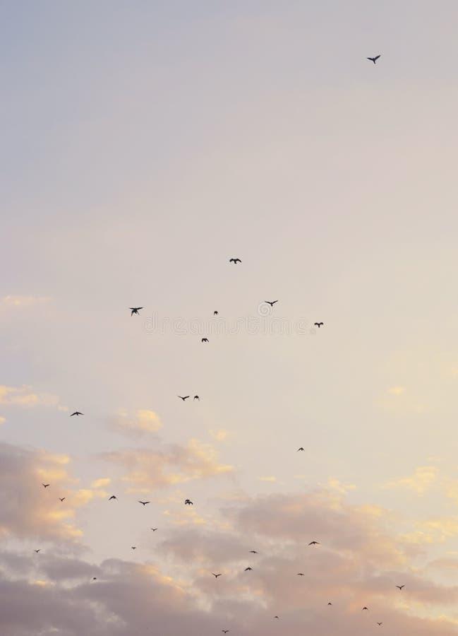 Fundo bonito com nuvens e pássaros foto de stock