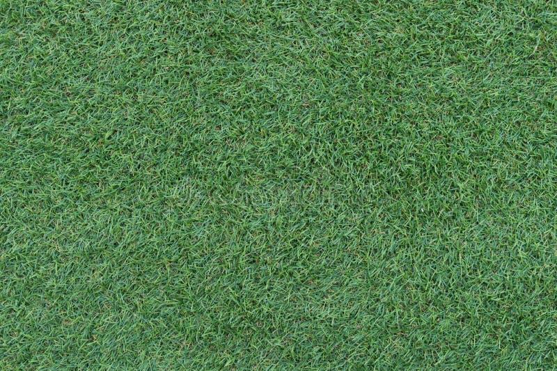 Fundo bonito da grama verde, textura, teste padrão fotos de stock royalty free