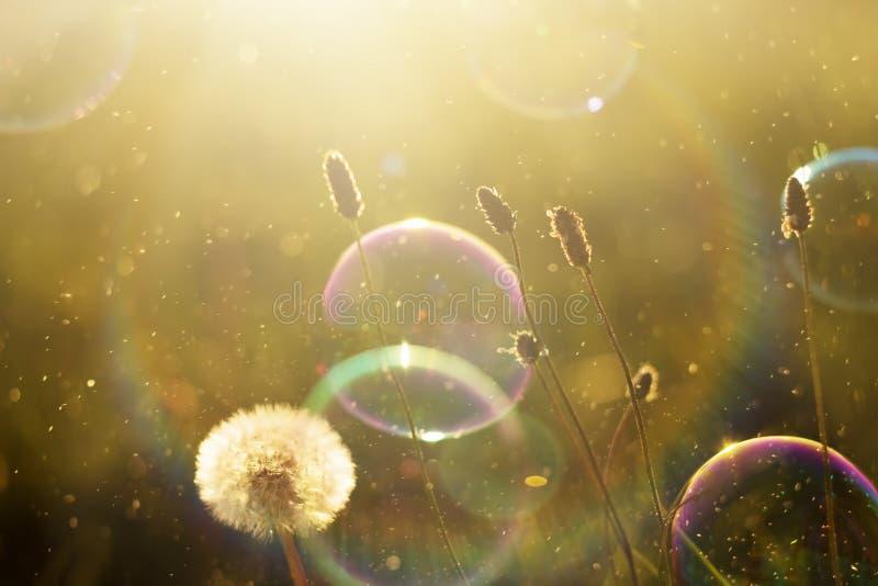 Fundo bonito da natureza com bolhas de sabão foto de stock