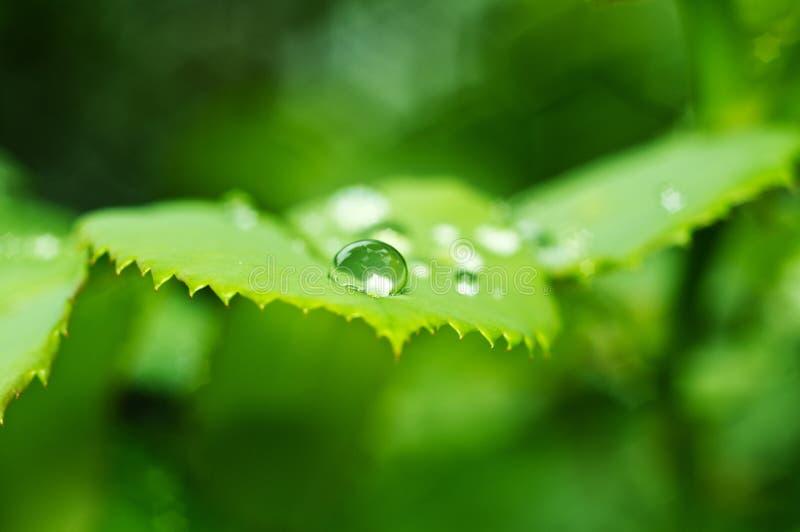 Fundo bonito da natureza com gotas frescas da manhã de transpar fotografia de stock