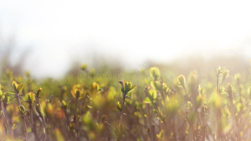 Fundo bonito da natureza ver?o, conceitos da mola Copie o espa?o Galhos novos bonitos imagem de stock royalty free