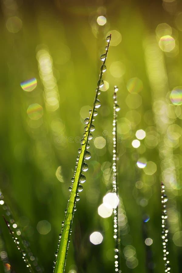 Fundo bonito natural com lotes de gotas de orvalho brilhantes no fotos de stock
