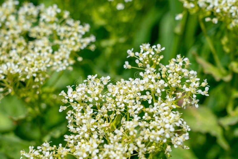 Fundo borrado abstrato, composição macro do sumário da flor Tiro macro do foco macio de pouca flor imagem de stock royalty free