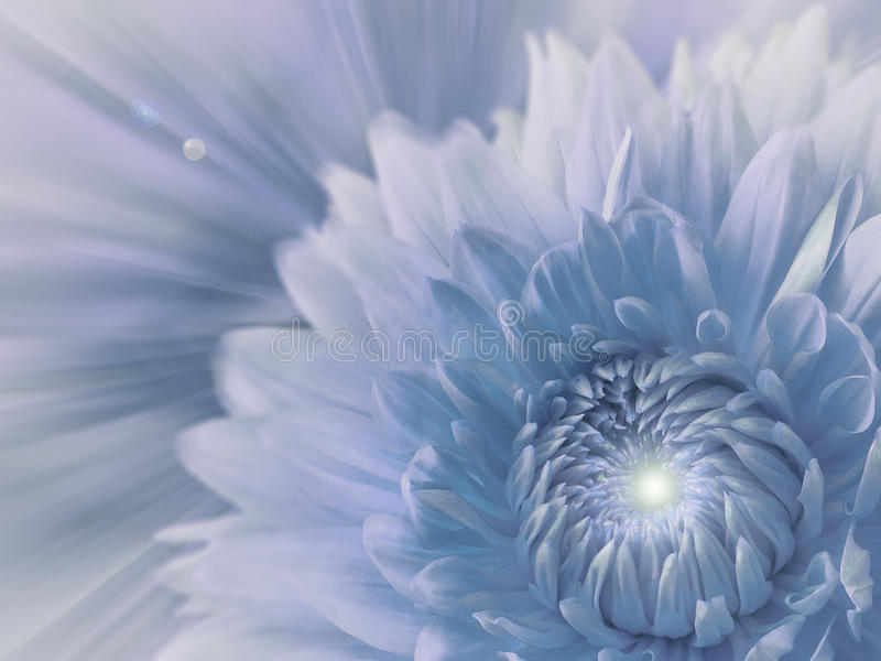 fundo borrado Branco-azul-cinzento dália da flor no fundo borrado Composição floral Cartão para o feriado foto de stock