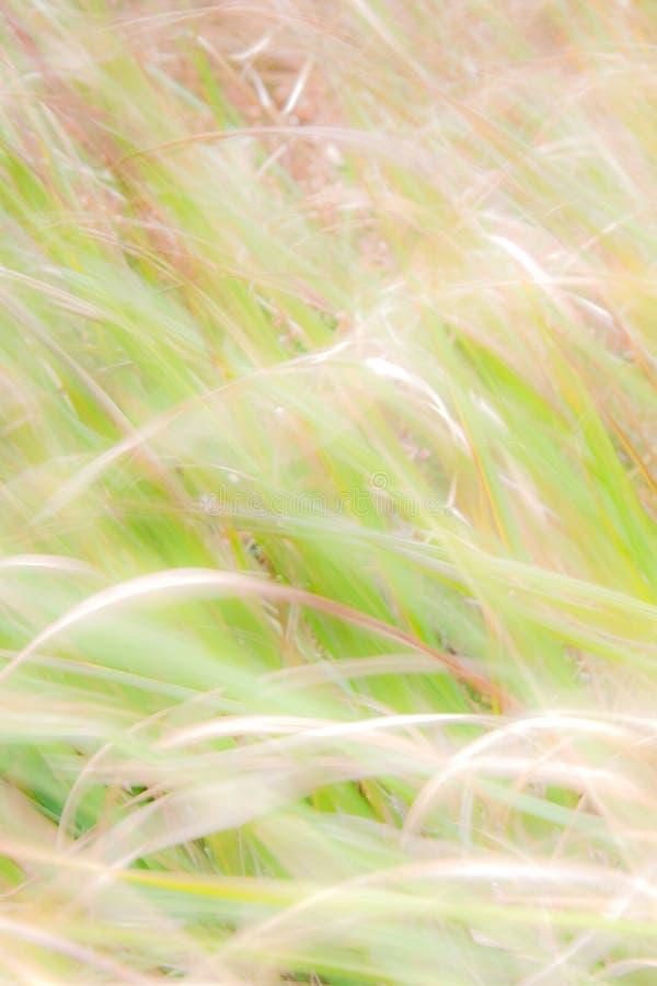 Fundo borrado - contexto abstrato da natureza - paisagem macia do prado imagem de stock