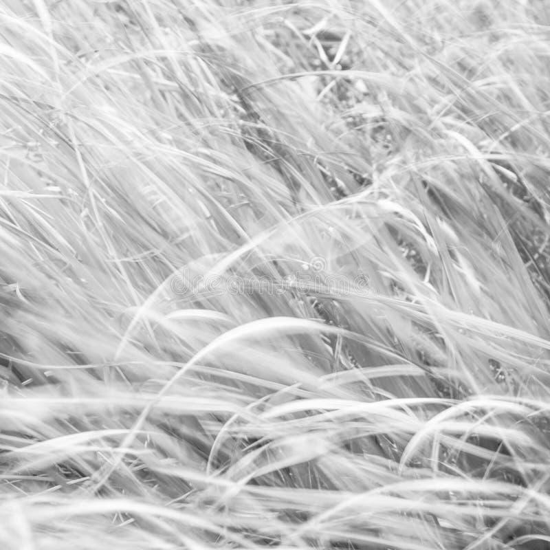 Fundo borrado - contexto abstrato da natureza - paisagem macia do prado fotografia de stock royalty free