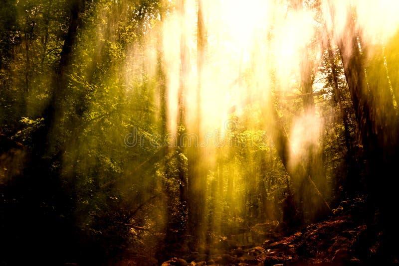 Fundo borrado das árvores fotografia de stock royalty free