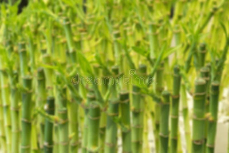 Fundo borrado de hastes de bambu verdes O bambu dispara em liso Bandeira do papel de parede do fundo imagens de stock royalty free