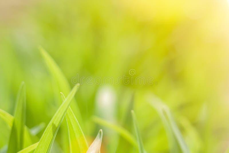 Fundo borrado natural do verde ensolarado do sumário imagem de stock