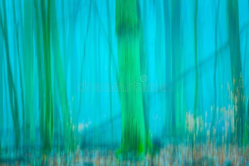Fundo borrado sumário da floresta fotos de stock royalty free