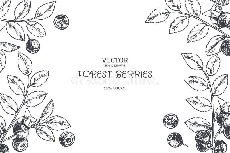 Fundo botânico do vintage do vetor com ramos do mirtilo em gravar o estilo Textura tirada mão com as bagas da floresta isoladas ilustração do vetor