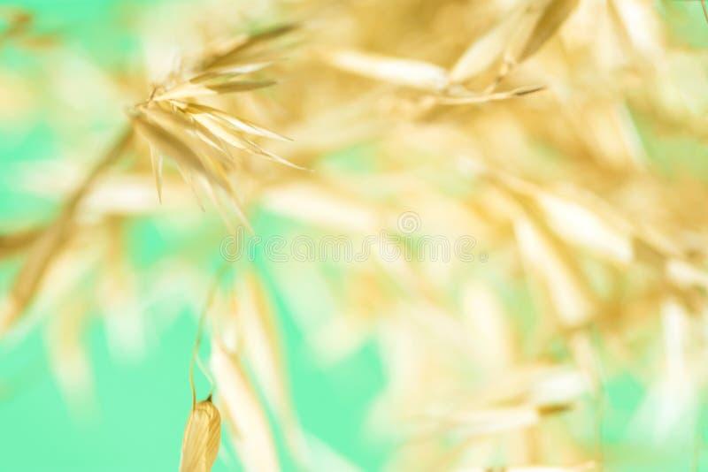 Fundo botânico outonal elegante bonito da natureza Plantas amarelas douradas borradas do campo em claro - fundo verde de turquesa imagens de stock royalty free
