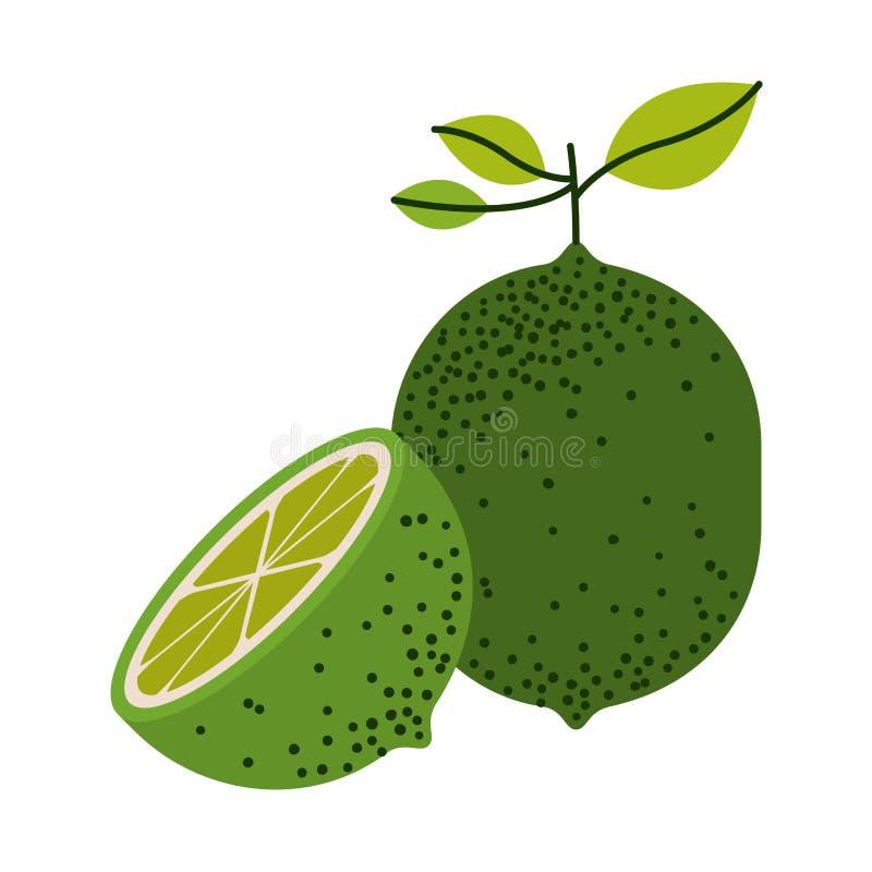Fundo branco com um corte do fruto do limão e do limão da metade e sem contorno ilustração royalty free