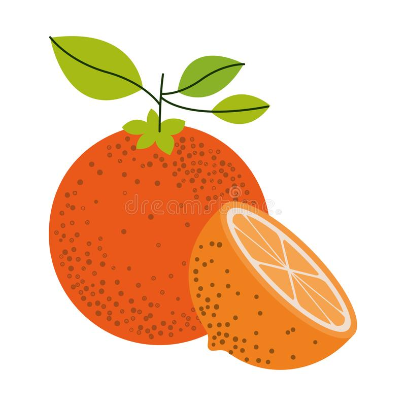 Fundo branco com um fruto alaranjado e meio corte alaranjado e sem contorno ilustração stock