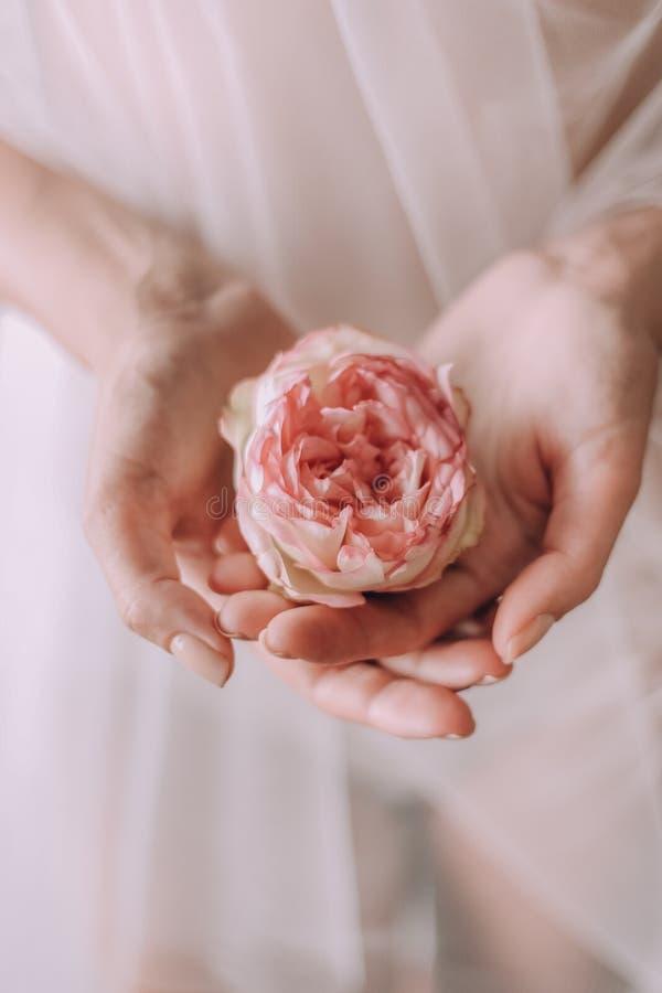 Fundo branco do vestido das mãos fêmeas da rosa da flor foto de stock