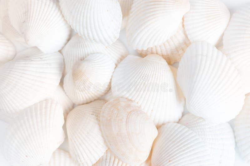 Fundo branco dos shell imagens de stock royalty free