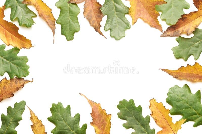 Fundo branco Folhas de outono coloridos foto de stock royalty free