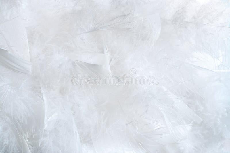 Fundo branco natural delicado de penas de pássaro muito macias foto de stock royalty free