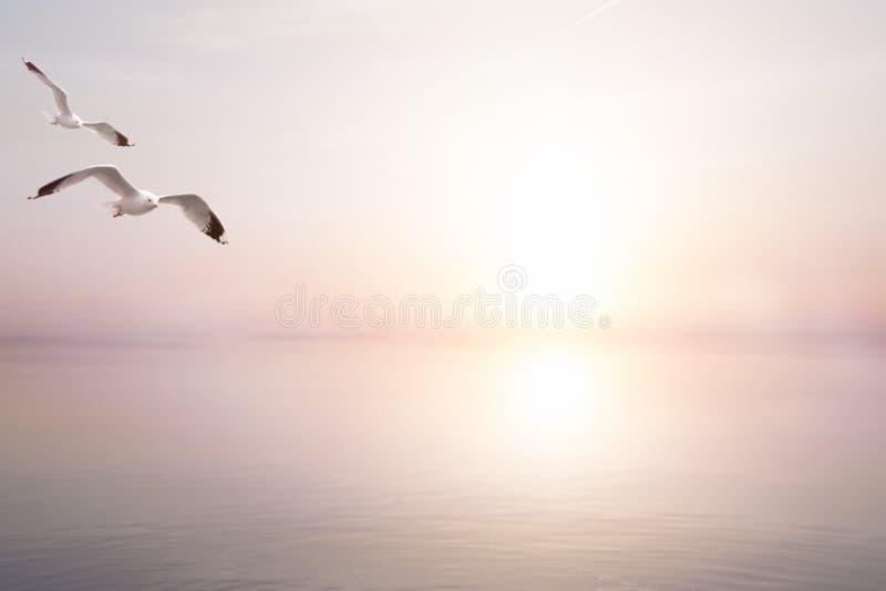 Fundo claro bonito abstrato do verão do mar da arte fotos de stock