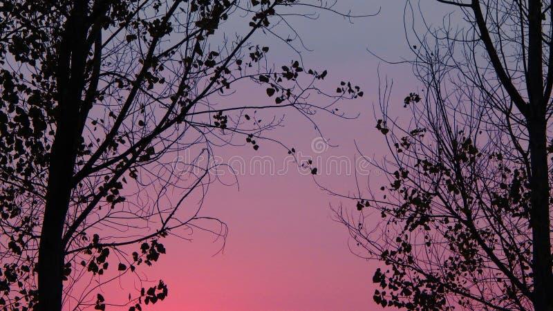 Fundo colorido bonito do céu com árvores imagens de stock royalty free